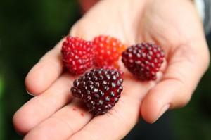 FEAST: An Edible Road Trip / Un voyage comestible sur la route