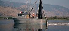 """Slow Fish: Know Your Fisherman"" Documentary:  Here's to Good, Clean and Fair Fish in Canada"