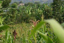 Mise à jour sur l'un de nos jardins en Afrique